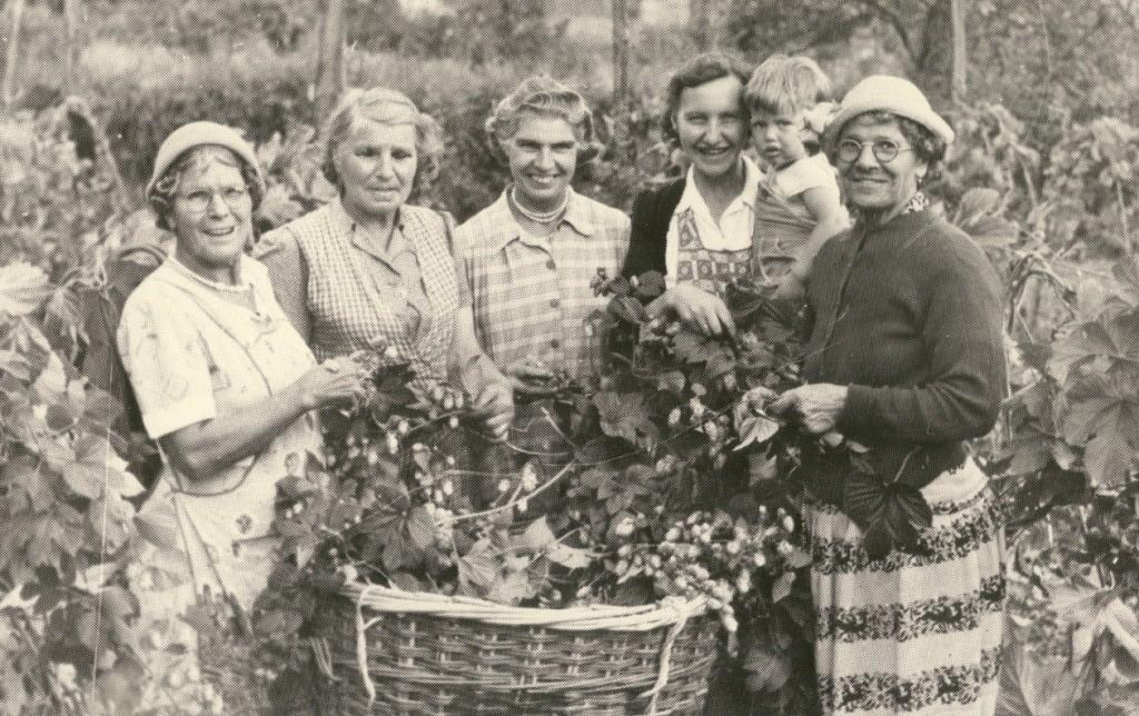 Hop Picking Olive Walker